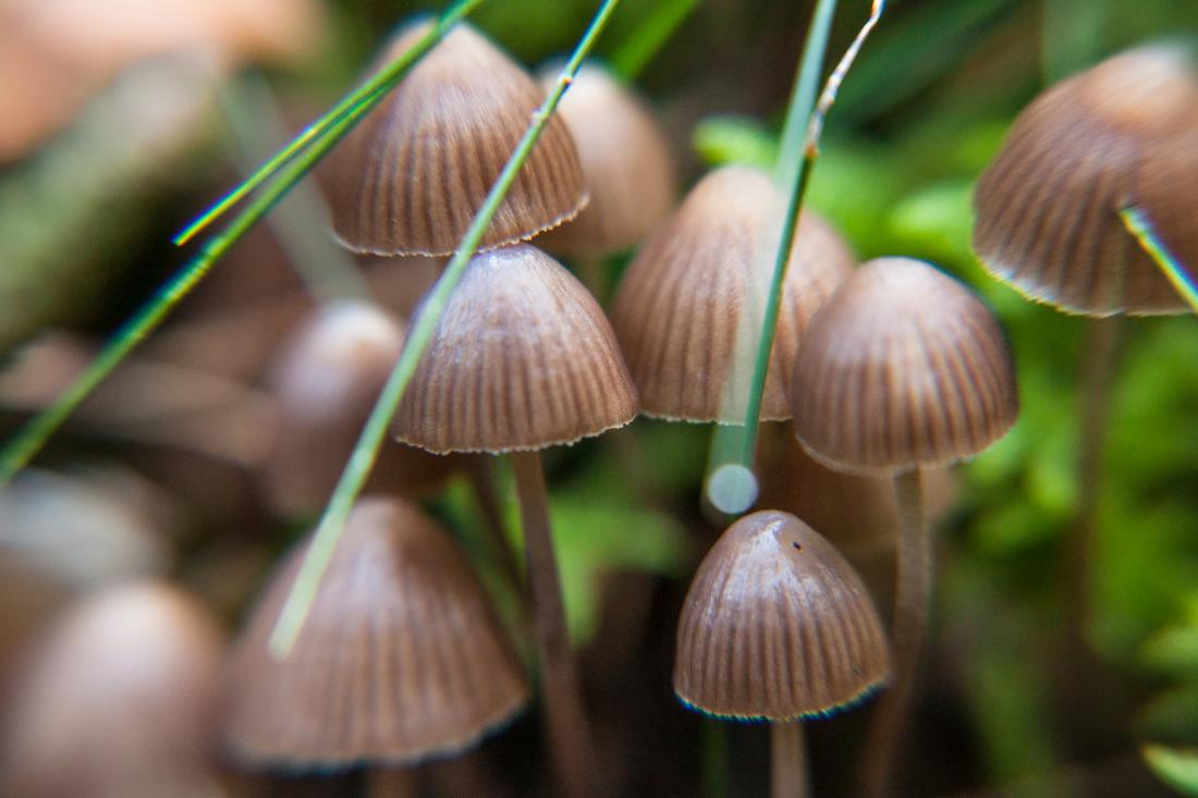 Psilocybin's potential as a treatment for mental health conditions